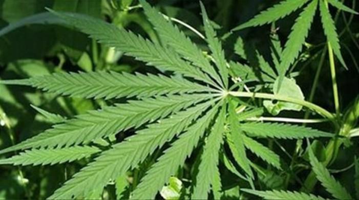 Μεγάλη επιτυχία της δίωξης Ναρκωτικών Καστοριάς
