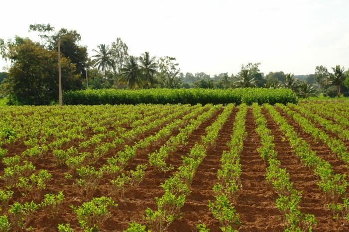 Αποστέλλονται 500.000 ειδοποιητήρια με έξτρα φόρο για αγρότες και επιχειρήσεις