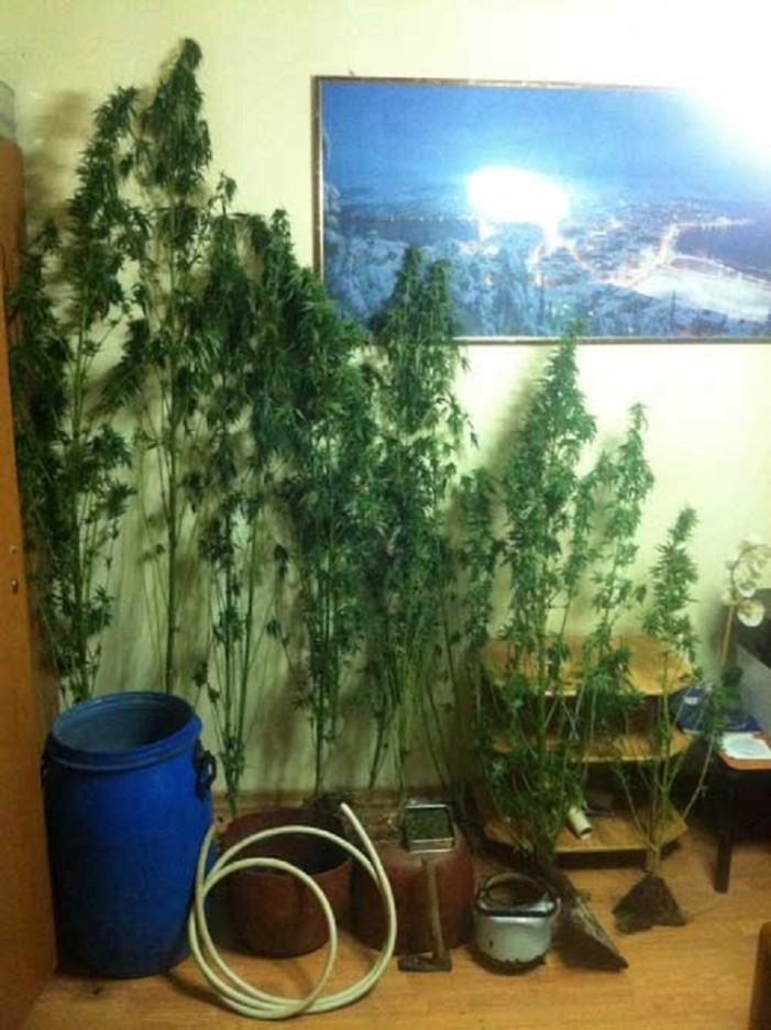 Καστοριά: Σύλληψη 39χρονου που καλλιεργούσε κάνναβη στην Κορομηλιά(φωτογραφία)