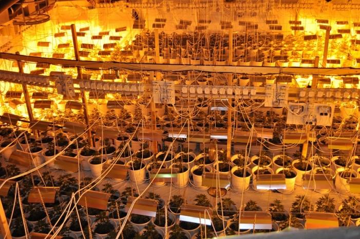 Τεράστια χασισοφυτεία στο Ναύπλιο (φωτό)