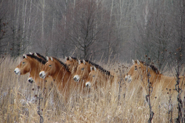 Άλογα. Φωτο: Tatyana Deryabina