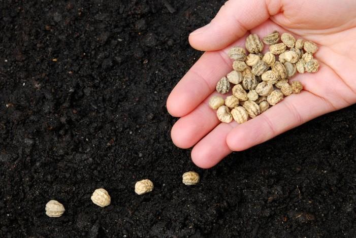 Φθινοπωρινή γιορτή σπόρων από την εναλλακτική κοινότητα «Πελίτι»