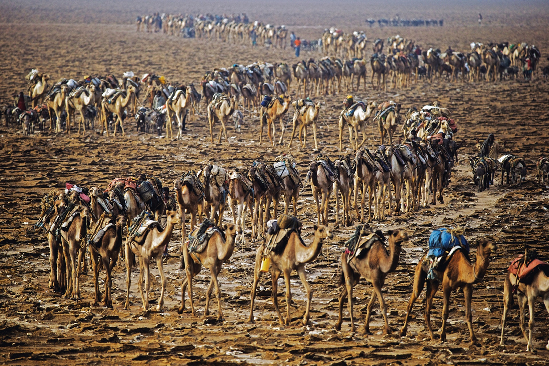 Λίμνη Karum, καραβάνι μεταφοράς αλατιού, Αιθιοπία