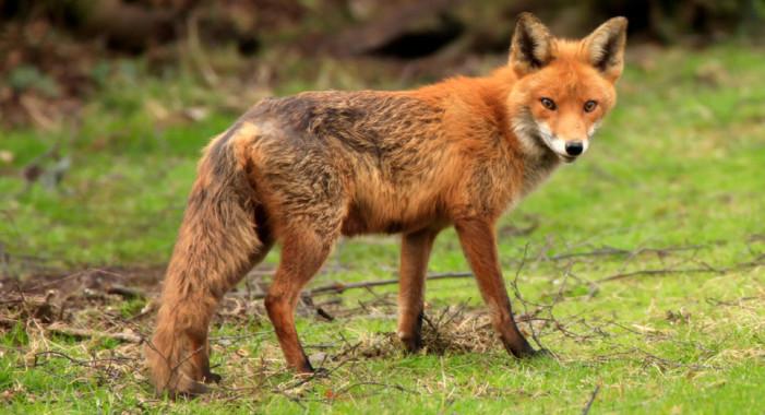 Π.Ε. Καστοριάς: Εκστρατεία κατά της Λύσσας (βίντεο)