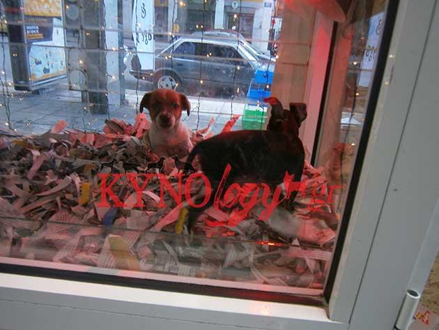 Ζητούν άμεση απαγόρευση της πώλησης ζώων από καταστήματα!