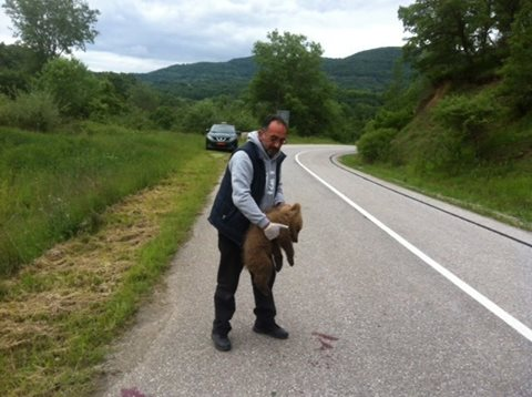 Ένα μικρό αρκουδάκι, θύμα τροχαίου στο Άργος Ορεστικό
