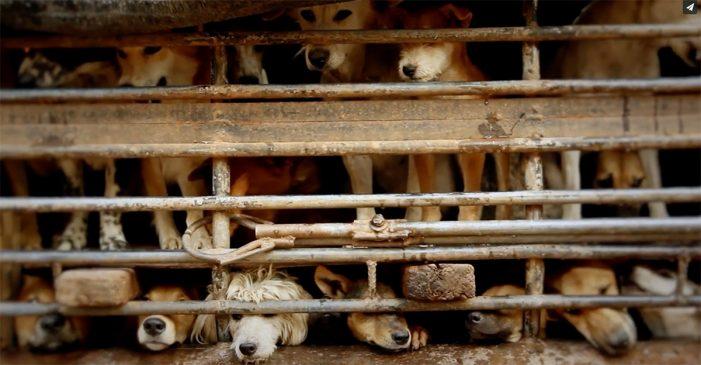 Κοζάνη: Κρατούσαν κλεισμένα 251 σκυλιά κάτω από άθλιες συνθήκες!