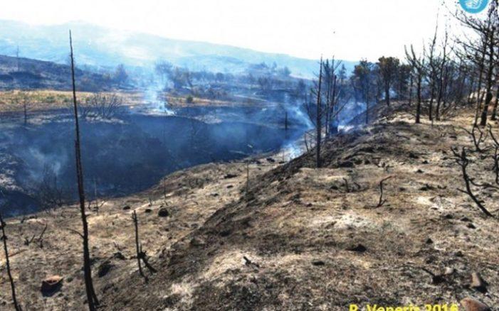 Κάηκαν πάνω από 22.000 στρέμματα στη Ρόδο