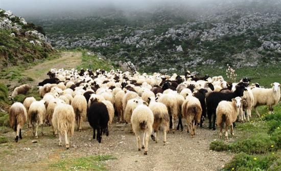 Γρεβενά: Χρηματοδοτικά προγράμματα για διάσωση εγχώριων φυλών στην κτηνοτροφία