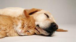 Τι ονειρεύονται οι σκύλοι; Το Harvard έδωσε απάντηση και οι ιδιοκτήτες τους βάζουν τα κλάματα .