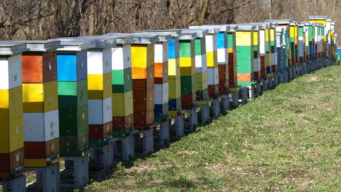 Καστοριά: Ανακοίνωση για καταγραφή των κυψελών διαχείμασης και προγραμμάτων ενίσχυσης της μελισσοκομίας