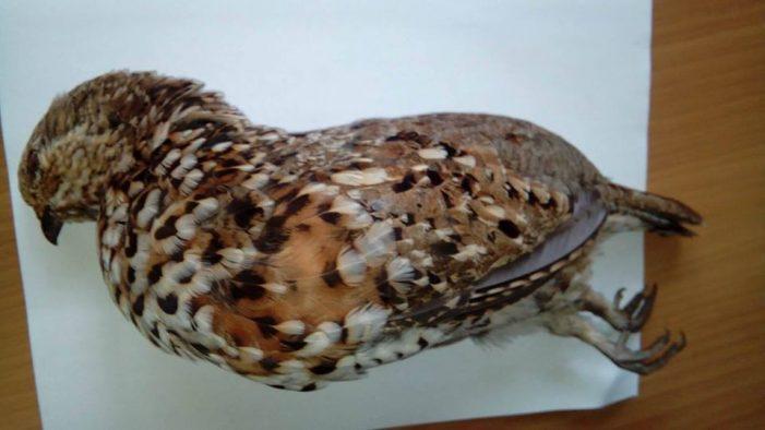 Εταιρία Προστασίας Περιβάλλοντος Καστοριάς : Πριν πυροβολήσουμε ένα πουλί καλά είναι να μπορούμε να το αναγνωρίσουμε πρώτα