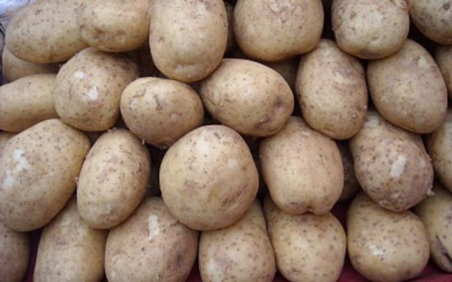 Πάγωσαν 2.500 τόνοι πατάτας στην Κοζάνη – Τεράστια ζημιά για τους παραγωγούς!