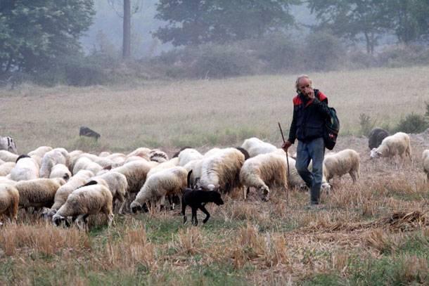 Δήμος Άργους Ορεστικού: Προειδοποίηση προς τους κτηνοτρόφους για τον καιρό