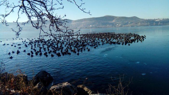Σε κίνδυνο τα πουλιά λόγω της παγωμένης λίμνης