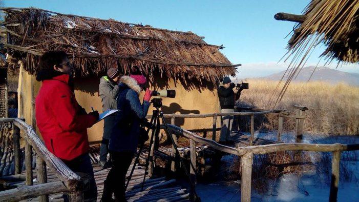 Μεσοχειμωνιάτικες Καταμετρήσεις Υδρόβιων Πουλιών: Η παγωμένη λίμνη έδιωξε τα πουλιά