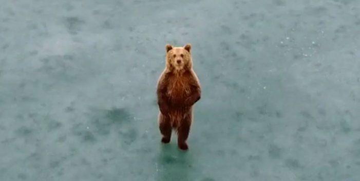 """""""Γυρολιμνιά με την αρκούδα"""" – Ανεπανάληπτο video με την υπογραφή του StudioTrasias"""