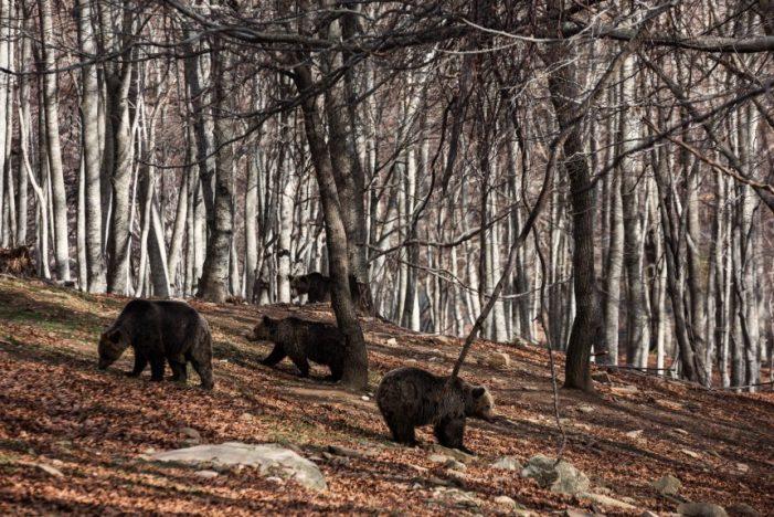 Η Άνοιξη ήρθε- Ξύπνησαν οι αρκούδες στο Νυμφαίο (φωτογραφίες)