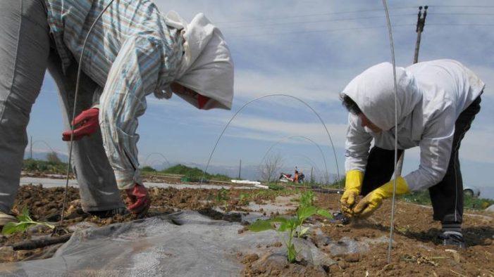 Κίνητρα για την ίδρυση μίνι αγροτικών συνεταιρισμών