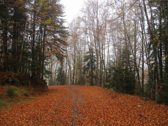 Οι ξεναγήσεις του Νοεμβρίου στο Πάρκο Εθνικής Συμφιλίωσης