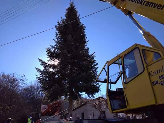 Άργος Ορεστικό: Διαδικασία κοπής χριστουγεννιάτικου δέντρου