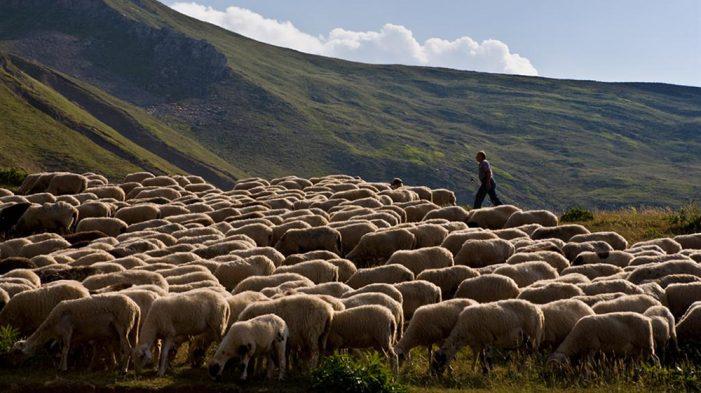 Μέχρι 31 Δεκέμβρη αιτήσεις κτηνοτρόφων για διόρθωση σφαλμάτων βοσκότοπων