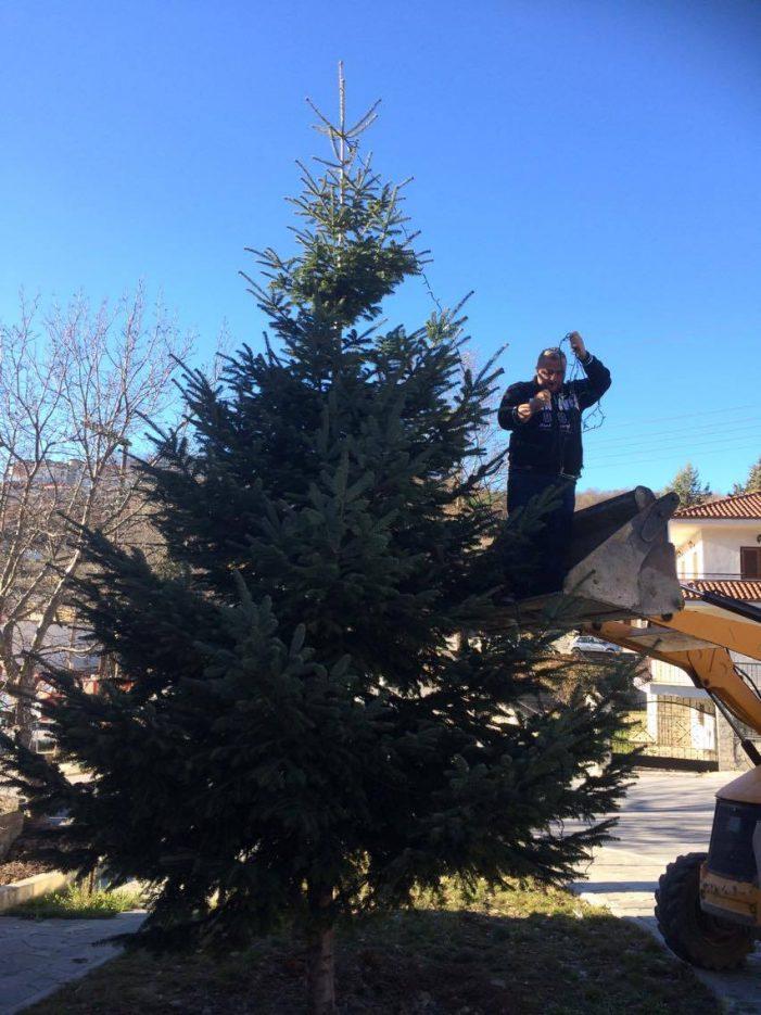 Ετοιμάζεται το χριστουγεννιάτικο δέντρο στο Νεστόριο