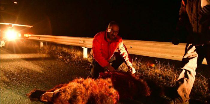 Δεύτερο θανατηφόρο τροχαίο ατύχημα στο ίδιο σημείο μέσα σε 24 ώρες