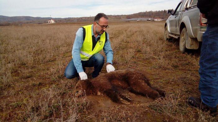 Νεκρό αρκουδάκι το πρώτο θύμα του 2018