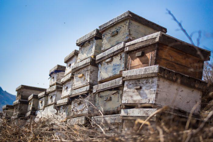 Κέντρο «Δήμητρα» Καστοριάς: 3ήμερη εκπαίδευση μελισσοκομίας