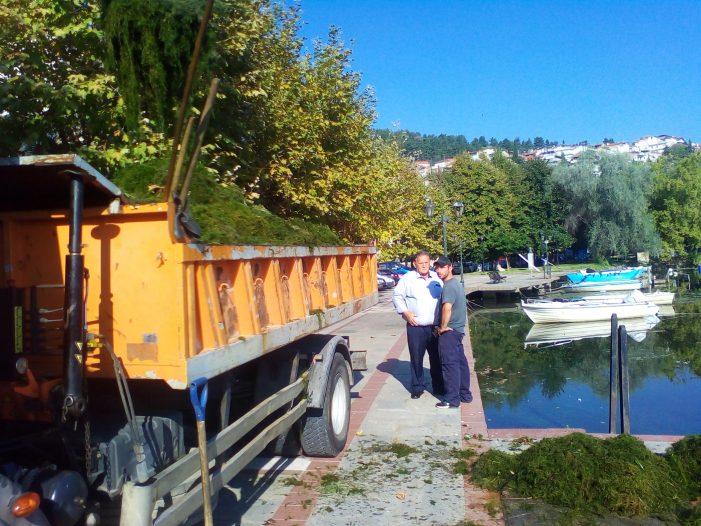 Καστοριά: Καθαρισμός των χόρτων της λίμνης