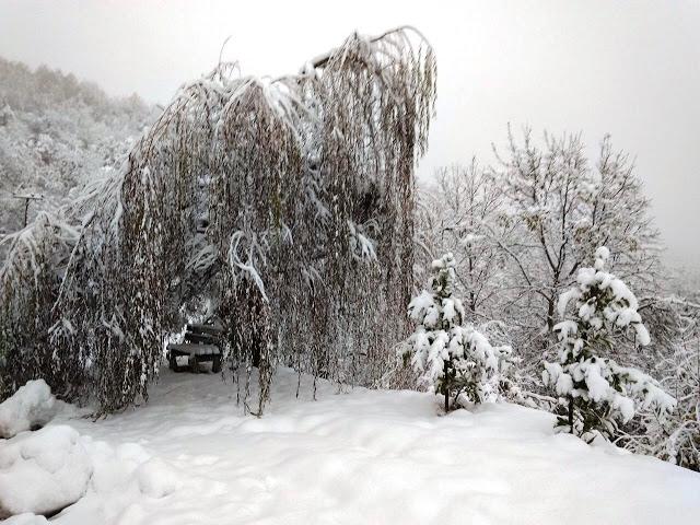 Το χιονισμένο Καστανόφυτο