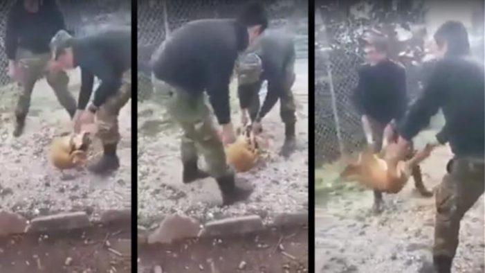 Δέκα χρόνια φυλακή με αναστολή στους φαντάρους που είχαν πετάξει σκύλο σε γκρεμό (Σκληρό Video)