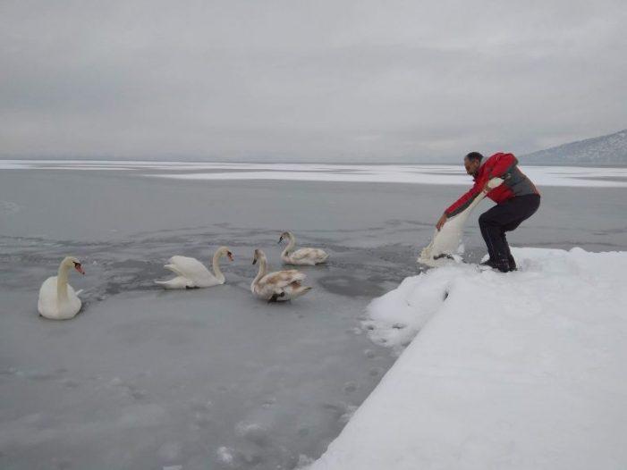Εθελοντές σώζουν εγκλωβισμένα πουλιά στην παγωμένη της λίμνη