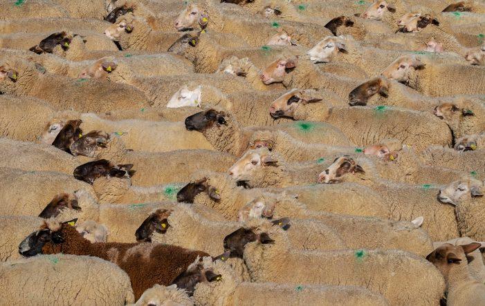 Ενημέρωση για τους Κτηνοτρόφους της Π.Ε Καστοριάς