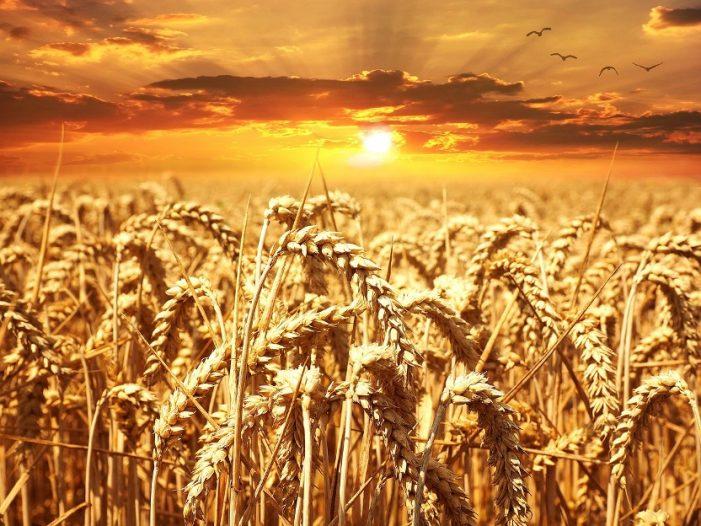 Καταγραφή Αγροτών εντός Δημοτικής Ενότητας (Δ.Ε.) Μεσοποταμίας & Καλλιεργητών εκτός Δ.Ε. Μεσοποταμίας με καλλιέργειες εντός της Δ.Ε. Μεσοποταμίας