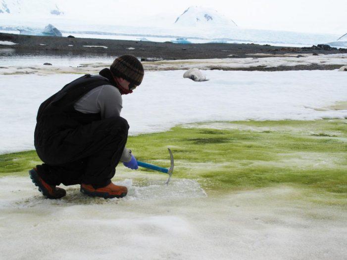 Το μυστήριο της Ανταρκτικής: Το χιόνι γίνεται πράσινο (Photos)