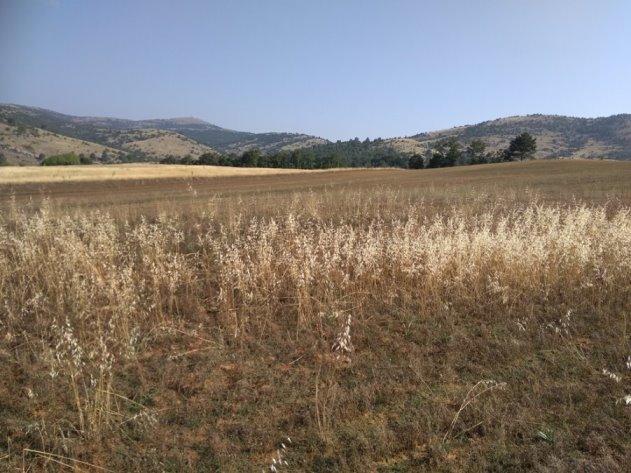 Επιστολή Αντιπεριφερειάρχη Καστοριάς για ζημίες σε καλλιέργειες παραγωγών