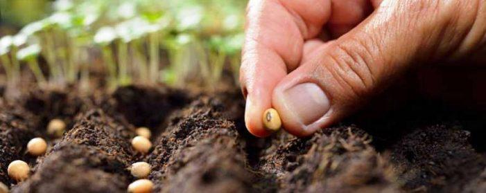 ΠΕ Καστοριάς: Άδεια χρήσης μη βιολογικού σπόρου