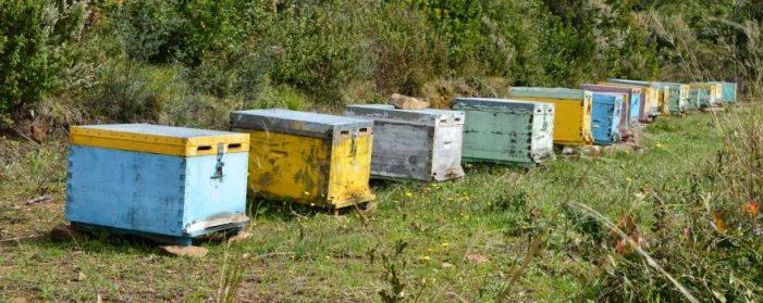 Αιτήσεις Δράσης για μελισσοκόμους 2021