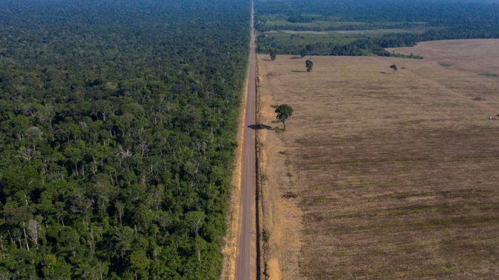Βραζιλία: Το 94% της αποψίλωσης του δάσους του Αμαζονίου γίνεται παράνομα