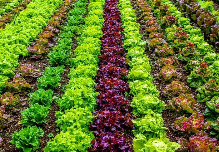 Ξεκινά σήμερα 24/05 η διαδικασία παραχώρησης μικροαγρών στο δημοτικό λαχανόκηπο